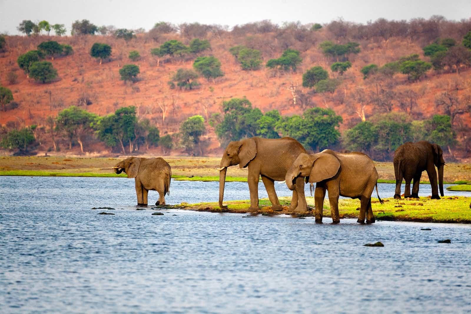 Entre safari et culture, voici ce que le Botswana vous apportera lors de votre Voyage en afrique