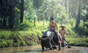 Thaïlande, destination touristique phare des voyageurs du monde