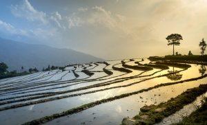 Quelle est la meilleure période pour aller au Vietnam?
